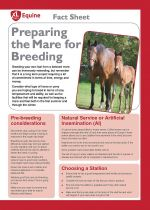 Breeding from your mare